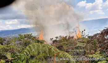 Siguen trabajos por incendio entre Tabio y Tenjo,... - Noticias Día a Día