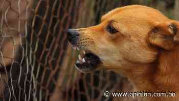 Envenenan a perros callejeros en Punata - Opinión Bolivia