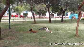 Mueren envenenados seis perros en Punata - Opinión Bolivia