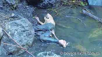 ¡Hallazgo macabro en Villeta! Encuentran cuerpo en descomposición de adulto mayor - Extra Boyacá