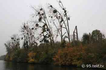 L'Île d'Herblay-sur-Seine classée sanctuaire de biodiversité - VOnews95