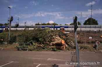 Orry-la-Ville - Coye-la-Forêt : l'abattage des platanes de la gare passe mal - Le Parisien