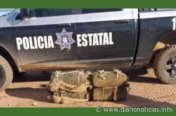 "DECOMISAN ""MOTA"" EN SONOYTA - Diario Noticias"