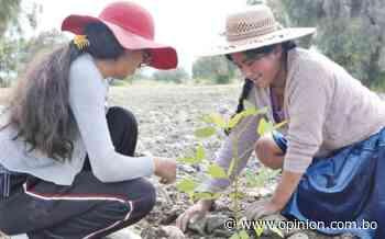 Reforestan el playón de Marquina con 3.500 plantines - Opinión Bolivia