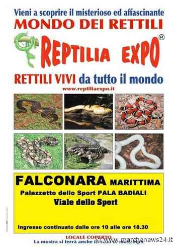 """Falconara Marittima, """"Reptilia Expo"""": il 15 e 16 febbraio - Marche News 24"""