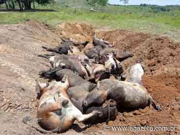Raio mata 16 cabeças de gado em fazenda de Ecoporanga - A Gazeta ES