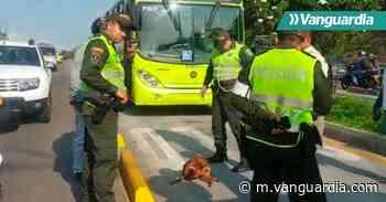 Bus de Metrolínea arrolló a un perro en la autopista a Floridablanca - Vanguardia