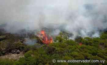 Bomberos trabaja para extinguir dos incendios en Maldonado - El Observador