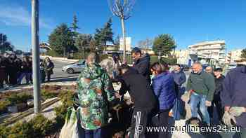 Bari, piantumazione di un albero nella rotatoria di via Vaccarella a Carbonara - Puglia News 24