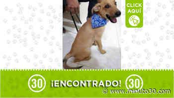 Este perrito fue encontrado en la salida de El Peñol - Minuto30.com