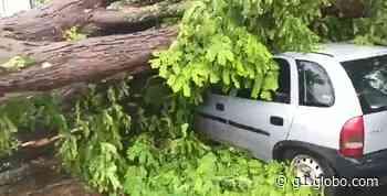Chuva forte derruba árvore sobre carro em Santa Cruz das Palmeiras - G1