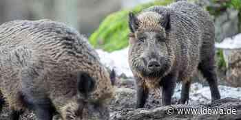 Jahresversammlung in Waltersdorf: Schweinemastprüfring - Biosicherheit im Fokus - Straubinger Tagblatt