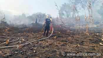 Grandes pérdidas deja incendio en maizal en Los Santos - Crítica
