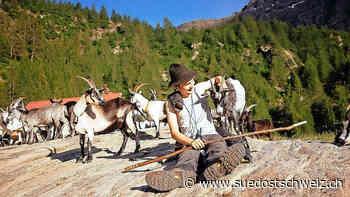 Diesen Sommer meckern schon 140 Geissen auf Aion - suedostschweiz.ch