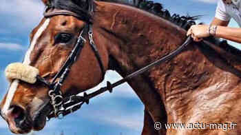 Saulx-les-Chartreux : Un chauffard fauche mortellement un cheval... - Actu-Mag.fr