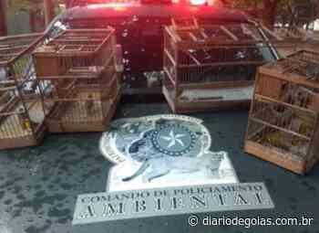 Pássaros mantidos em cativeiro são resgatados em Pires do Rio - Diário de Goiás