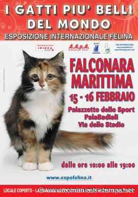 I GATTI PIU' BELLI DEL MONDO - Esposizione Internazionale Felina - FALCONARA MARITTIMA (Ancona) - Comunicati-Stampa.net