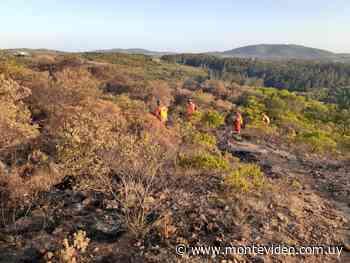 Incendio forestal en Pan de Azúcar continúa en propagación y consumió más de 50 hectáreas - Montevideo Portal