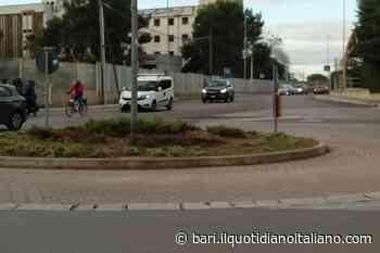 Bari, rubato due volte in 15 giorni: a Carbonara preso di mira l'albero di albicocche piantato dai volontari - Il Quotidiano Italiano - Bari