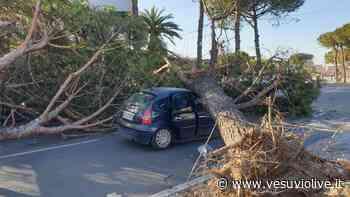 Allerta vento: scuole chiuse a Torre, Ercolano, Portici e San Giorgio - Vesuvio Live