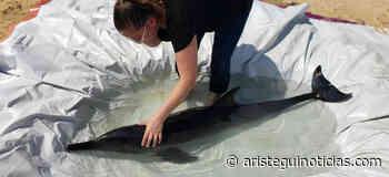 0 comentarios Muere delfín en Puerto Escondido, Oaxaca - Aristeguinoticias