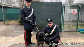 Castel Maggiore: quattro cani abbandonati in un furgone, i passanti chiamano i Carabinieri - BolognaToday
