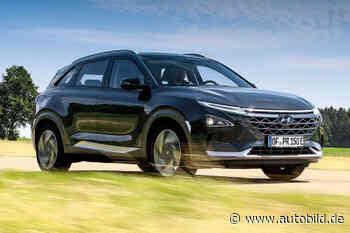 Hyundai Nexo: Kaufberatung zum Auto mit Wasserstoffantrieb - autobild.de
