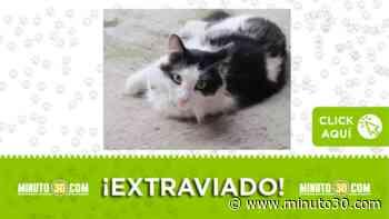 Este gato se perdió en el barrio Enciso y su familia lo busca - Minuto30.com