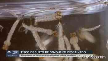 Descalvado está em risco de surto de dengue, segundo índice larval - G1