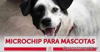 Gran jornada de implantación de microchip para mascotas en Ciudad Bolívar este sábado - Canal Capital