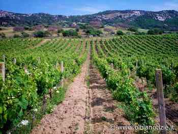 L'IPIA di Calangianus avrà il corso tecnico in enologia e viticoltura - OlbiaNotizie