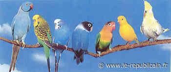 Essonne : Exposition-vente d'oiseaux d'élevage à Ballancourt-sur-Essonne - Le Républicain de l'Essonne