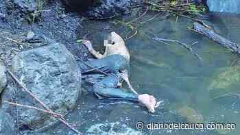 ¡Hallazgo macabro en Villeta! Encuentran cuerpo en descomposición de adulto mayor - Diario del Cauca