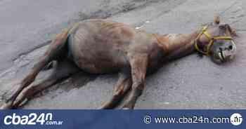 Abandonaron un caballo muerto frente al cementerio San Jerónimo - Cba24n