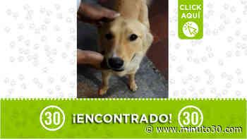 A este peludito se lo encontraron en Envigado - Minuto30.com