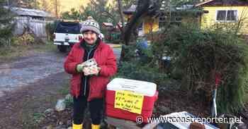 Elphinstone: Remembrances, washouts, colourful eggs - Coast Reporter