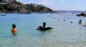 Mueren dos delfines en las playas de Puerto Escondido, Oaxaca - El Imparcial de Oaxaca