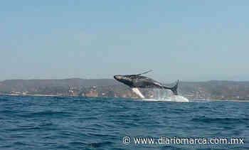 ¡Ballenas a la vista en Puerto Escondido! - Diario Marca de Oaxaca