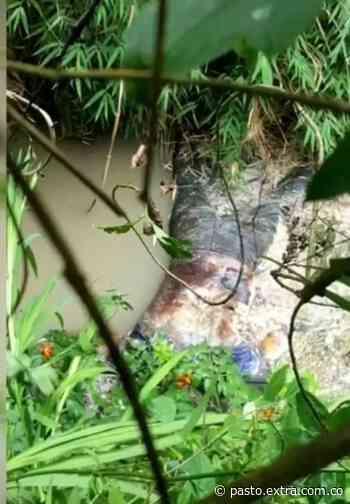 Encuentran cadáver de una mujer en alto estado de descomposición en Pupiales - Extra Pasto