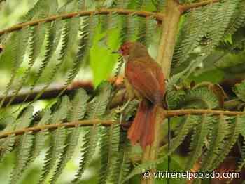 Nueva ave avistada en Alto de San Miguel - Vivir en el poblado