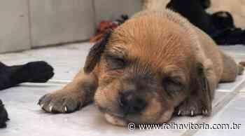 Vamos adotar? Praia de Itaparica recebe feira de adoção de cães e gatos neste fim de semana - Folha Vitória