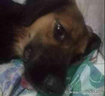 Condenarán al hombre que mató a un perro criollo en vía pública de Arauca - RCN Radio