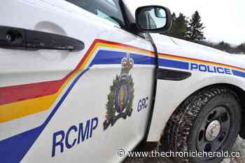Cole Harbour homeowner spots suspected robber in shed - TheChronicleHerald.ca