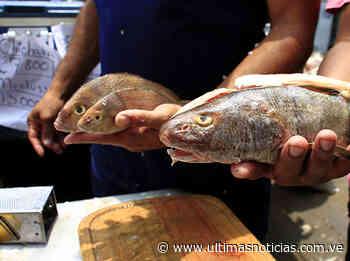 Distribuyen pescado a las familias de Cúpira - Últimas Noticias