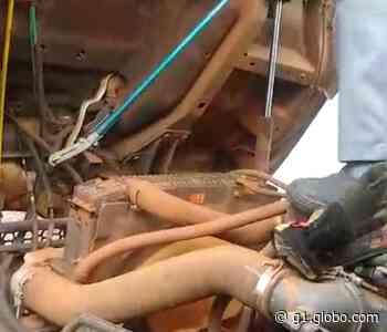 Corpo de Bombeiros captura cobra dentro do motor de caminhão em Rancharia; veja VÍDEO - G1