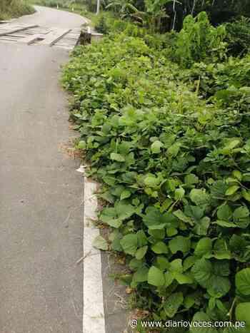 Carretera Uchiza Tocache se encuentra abandonada por autoridades - Diario Voces