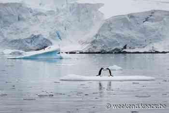 In beeld:dalend aantal pinguïns op Antarctica