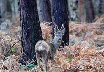 La faune forestière Maison des forêts de Saint-Etienne-du-Rouvray 15 mars 2020 - Unidivers