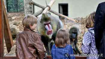 San Valentino, gli amori negli animali al Bioparco