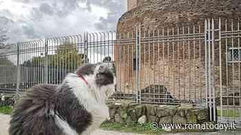 Villa De Sanctis, raccolta di cibo per la colonia di gatti randagi del parco